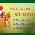 Bệnh mồng gà có nguy hiểm không?